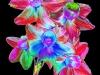 Daffodil Cut Away Foil by Geoff Osborne