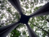 Looking Up in the Forest of Dean