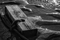 2015 Elizabeth Barker_Lost Wood-Mono