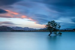 2017 – Wanaka Tree – Andy – 1st Long Exposure