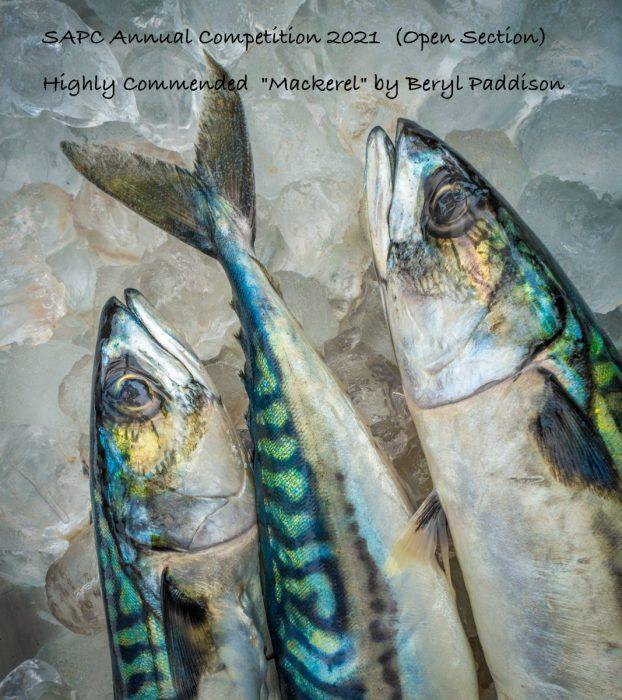 6_SAPC-O1 B Paddison – Mackerel (1 of 1)