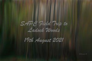 Field Trip to Ladock Woods @ Ladock Woods