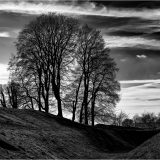 Mono-Highly Commended-Alan Barker-Trees by the Henge