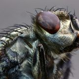 Open-Highly Commended-Paul Hughes-Fly